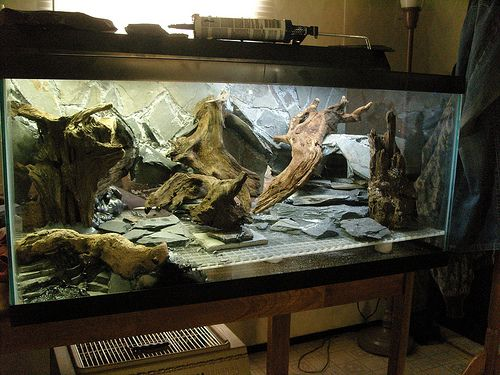 Leopard Gecko Tank Reptiles And Small Animals