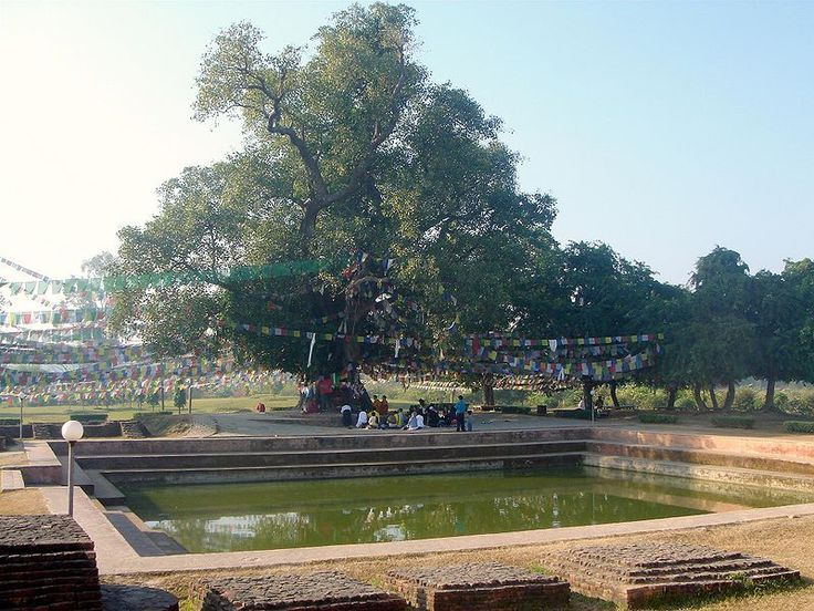 Bodhitree and the pond Mayadevi (Buddha's mother) took a bath before giving birth to the future Buddha./Lumbini