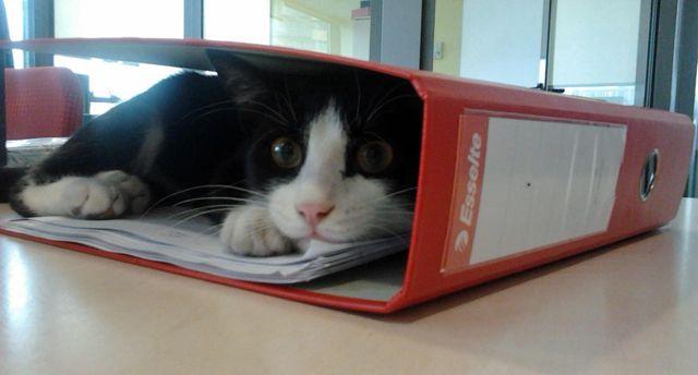 Pisica adoptată de Europa FM face reguli în redacție și se pozează cu vedetele din țară | LumeAnimalelor.ro: Informaţii non-stop despre câini şi pisici.