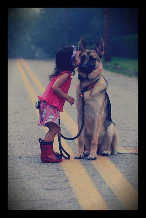 Duitse Herder  de mooiste honden die er bestaan omdat ze een super karakter hebben en ze zijn zo mooi