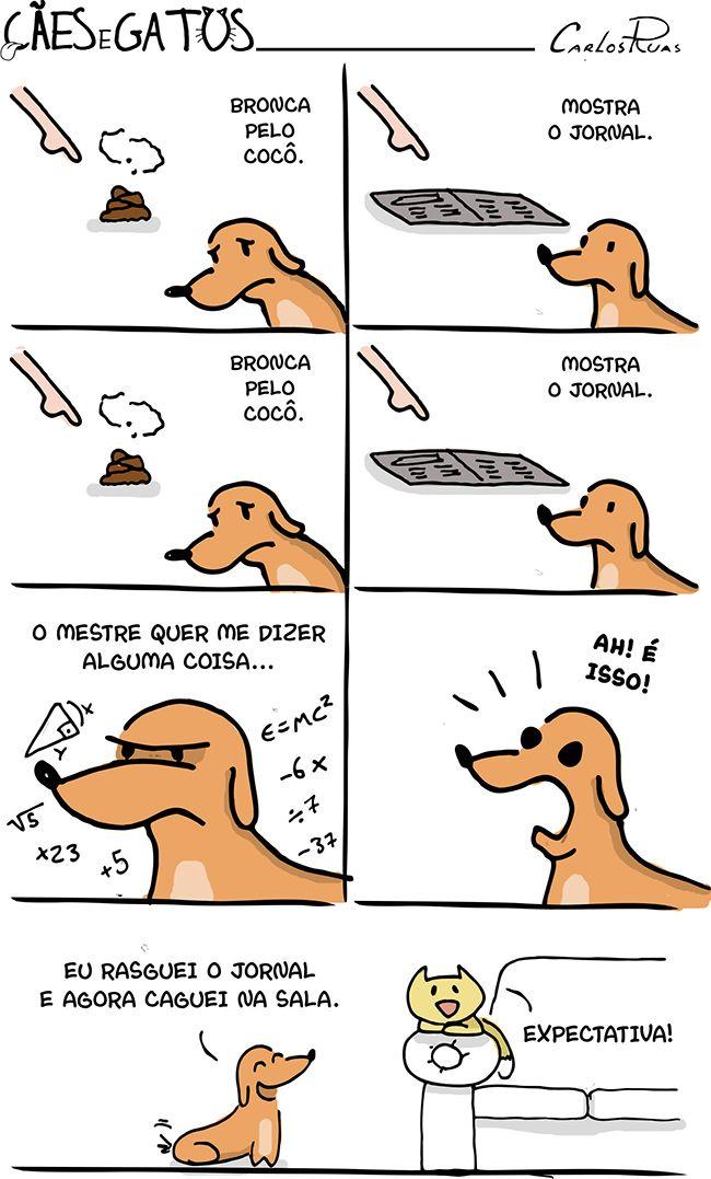 Cães e Gatos – Expectativa!