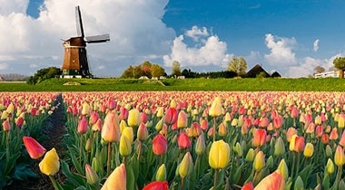 windmills and tulips: Tulips Windmills, Favorite Places, Places Visited, Favourite Places, Beautiful Places, Amazing Places, Holland Tulips, Tulips Remind