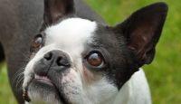 Fotos De Perros De La Raza Yorkshire Terrier Para Adoptar Para Fondo De Escritorio En Hd 2 HD Wallpapers