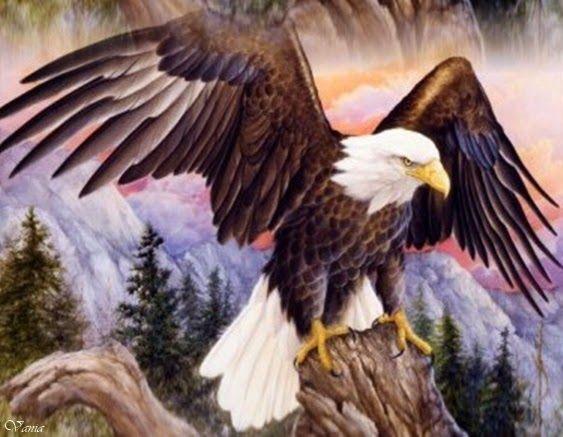 A HISTÓRIA DE RENOVAÇÃO DA ÁGUIA   Renovação da Águia é uma das histórias/lendasmais  conhecida e que muito pode tocar o ser humano pela r...