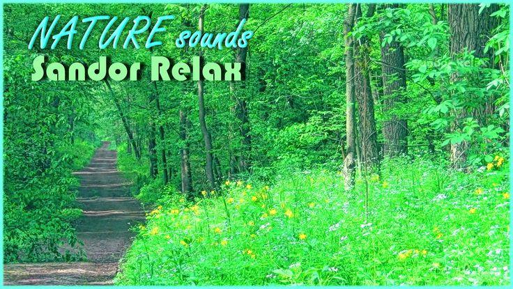 Erdő, sárgarigó, kakukk és esőcseppek hangjai - Relax Film - Forest, gol...