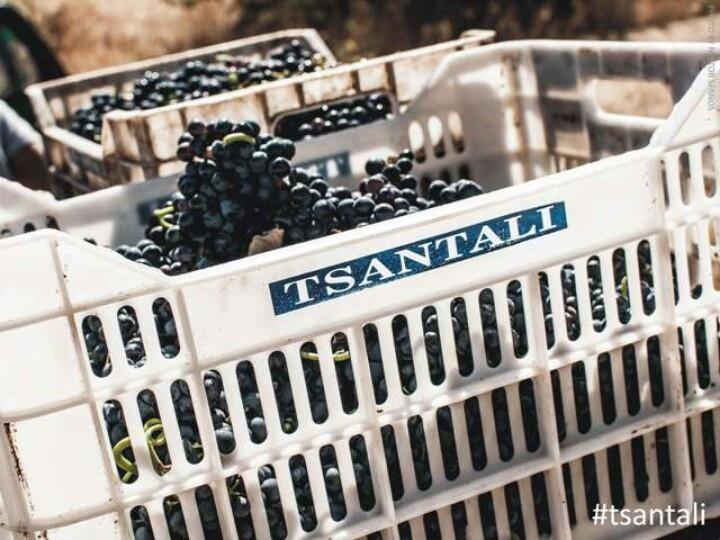Xinomavro grapes. Tough to say, yet amazing to taste. Rapsani TSANTALI vnyrds at mount olympus