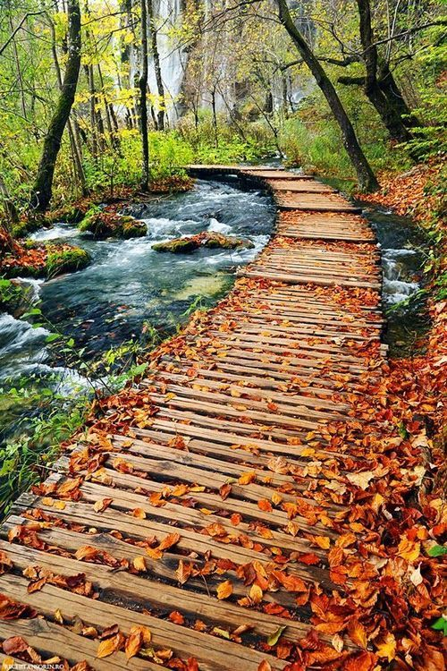 Autumn path in Plitvice Lakes National Park, Croatia.