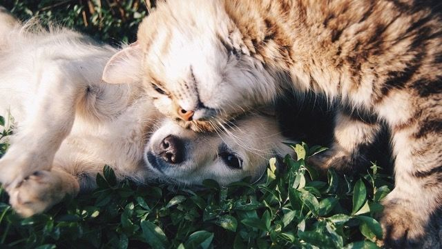 Do you know how your pet can catch heartworm? Our blog will tell you everything you need to know about prevention, signs and treatment!