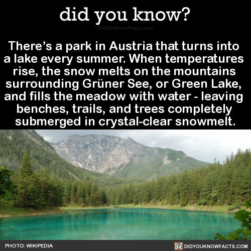 There's a park in Austria that turns into a lake every summer. When temperatures rise, the snow melts on the mountains surrounding Grüner See, or Green Lake, and fills the meadow with water - leaving benches, trails, and trees completely submerged in...