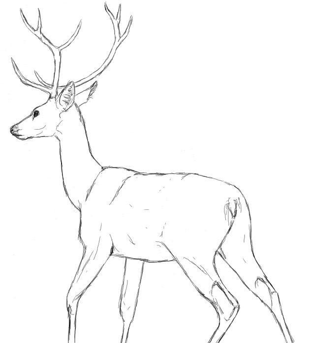 Line Drawing Deer : Best native american lacrosse images on pinterest