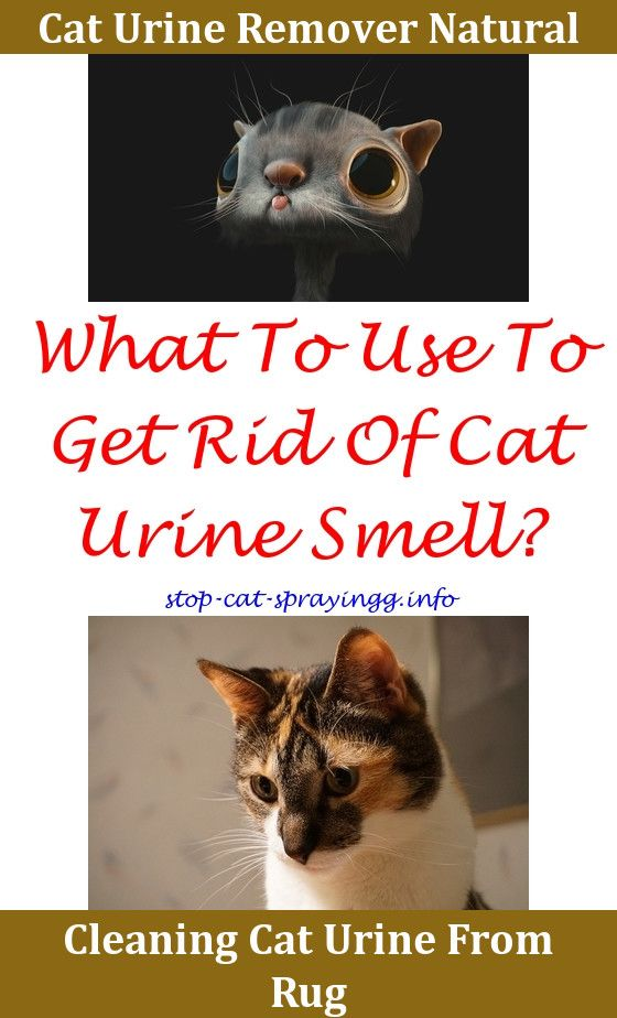 How To Neutralize Cat Urine Smell In Carpet Www