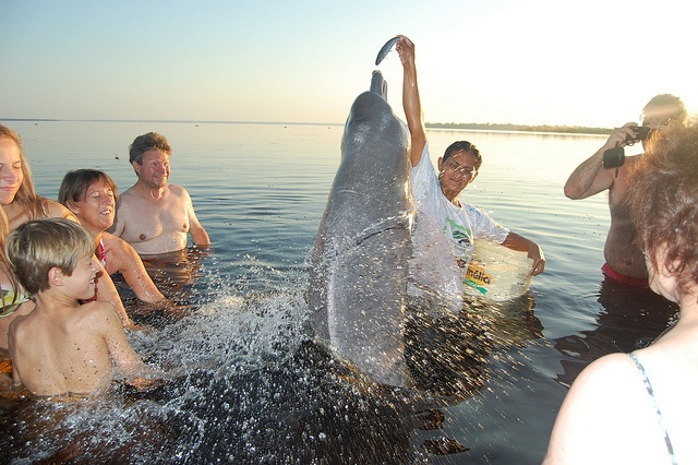 Pink dolphins by adventuresinbrazil.com, via Flickr