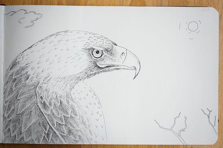 Eagle - Portraits in landscape