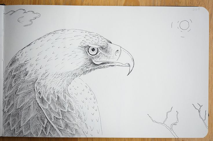 Eagle - Portraits in landscape