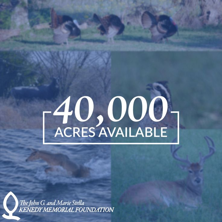White-tail deer, Nilgai, Wild Turkeys, Feral Hogs, Quail, Ducks, Dove. You name it, the Kenedy Memorial Foundation Ranch has it and more. Even better – your lease payments help support the most needy across Texas through KMF's charitable giving for educational and religious activities. Check out this amazing opportunity to lease the hunting and grazing rights for 40,000 acres of their historic South Texas Ranch.