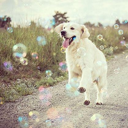 El tema de la esterilización canina es un tema muy controvertido, ya que están los partidarios de realizarla, y los detractores que se apoyan con el respeto a la naturaleza. ** REPORTE GRATUITO: La...