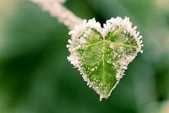 .Heart In Nature, Frostings Heart, Cœur Naturel, Frosty Green, Frozen Heart, Frostings Cold, Heart Shapped Rocks, Cold Heart, Nature Heart