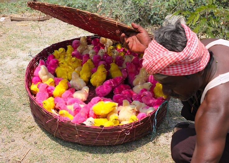 Chickens for Sale! Different Colours! | The Travel Tart Blog