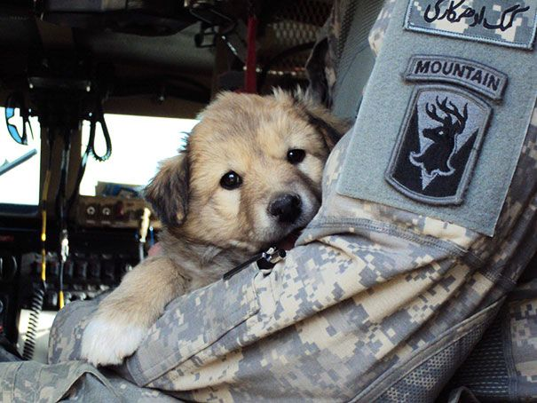 When You See What These 25 Soldiers Did For Their Pets, You Won't Be Able To Stop Smiling, Page 5   facebook