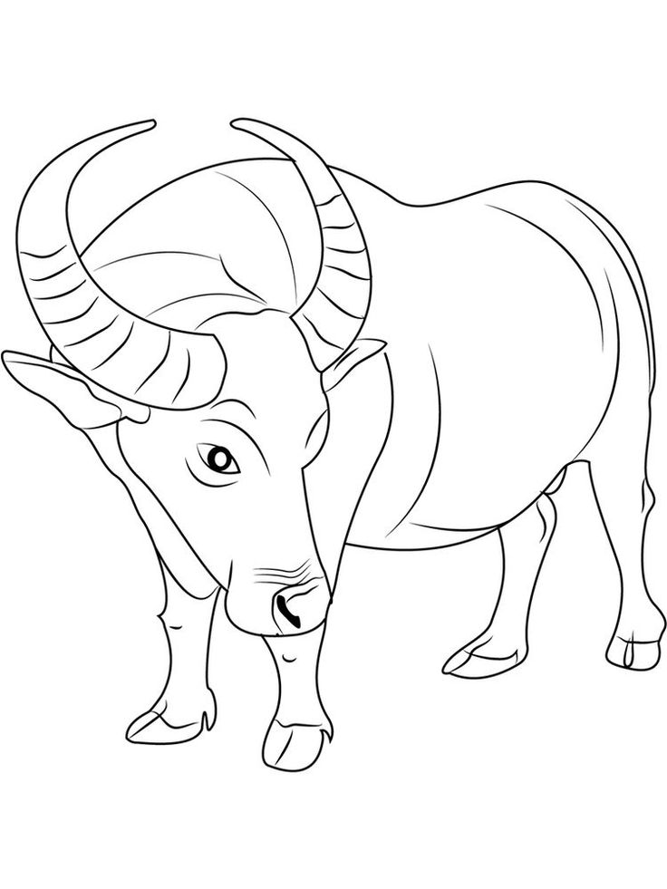 Buffalo Coloring Pages To Pdf Buffalo Is A Cattle Mammal Inhabit
