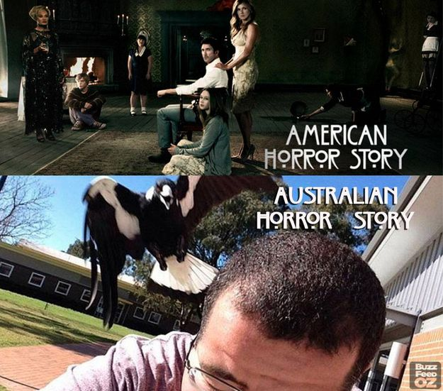 On spring: | 29 Of The Funniest Memes About Australia