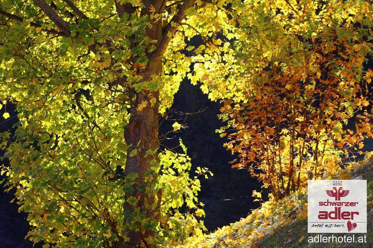 Buntes Herbstkleid der Bäume in Nauders am Reschenpass