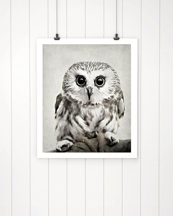 Owl photo owl photography cute owl print by semisweetstudios