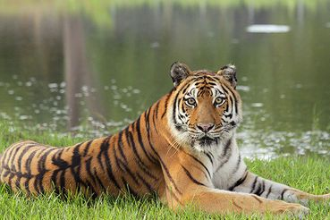 Help Stop Big Cat Abuse ! PLEASE SIGN ! ! - Care2 News Network