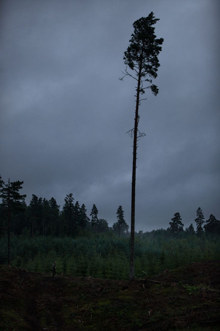 © fotograf John Sandlund, Fotograf www.johnsandlund.se