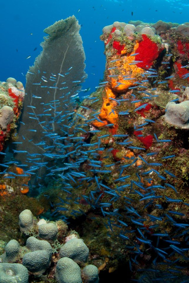 161 best coral reefs and reef aquariums images on pinterest
