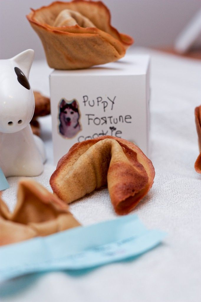 Make your dog it's own homemade Puppy Fortune Cookies!