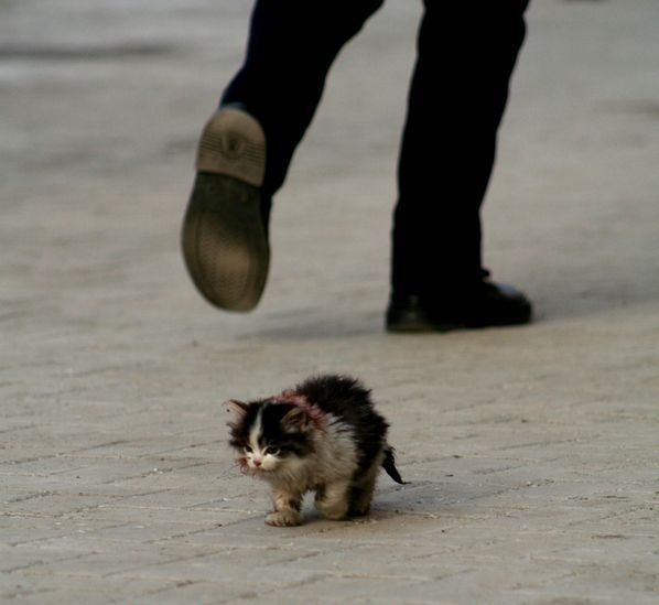 How can people simply pass this kitten and not stop to help?
