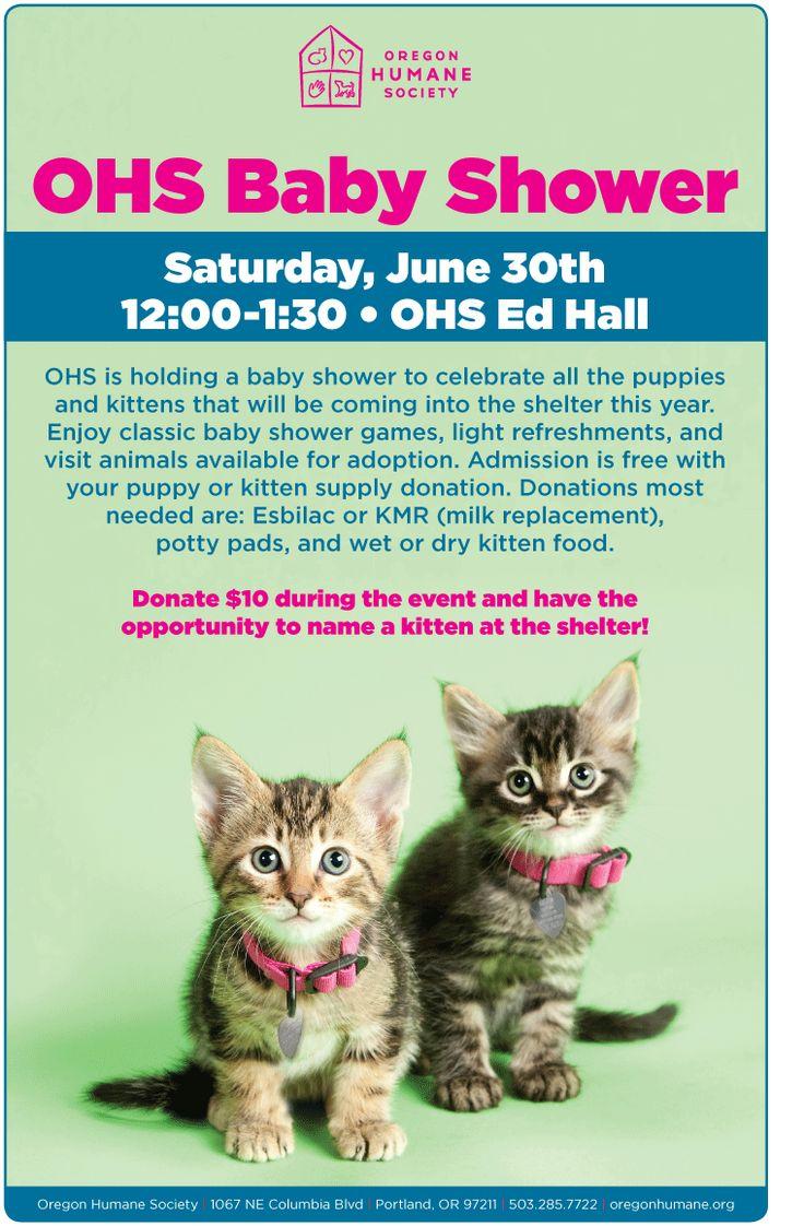 39 Best Kitten Shower Images On Pinterest Baby Kittens Baby Cats