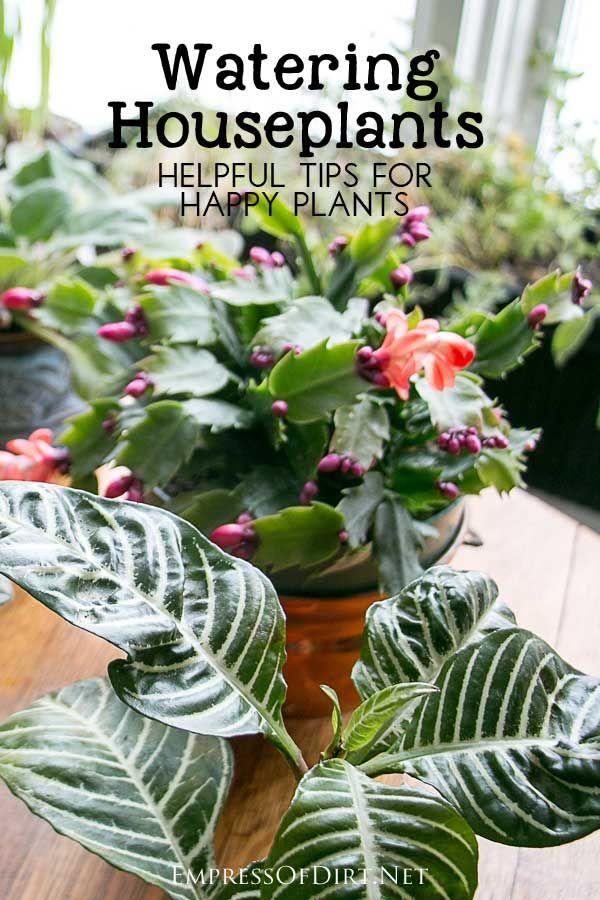 276 best indoor plants images on pinterest plants - How often should you water your garden ...