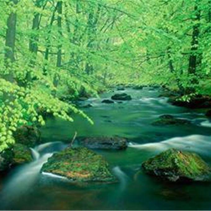 I Söderåsens djupa sprickdalar och ädellövskogar finns en enastående artrikedom.
