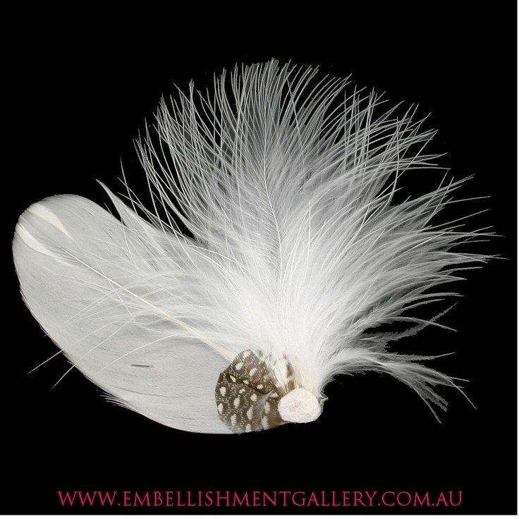 Different bird feathers - photo#48