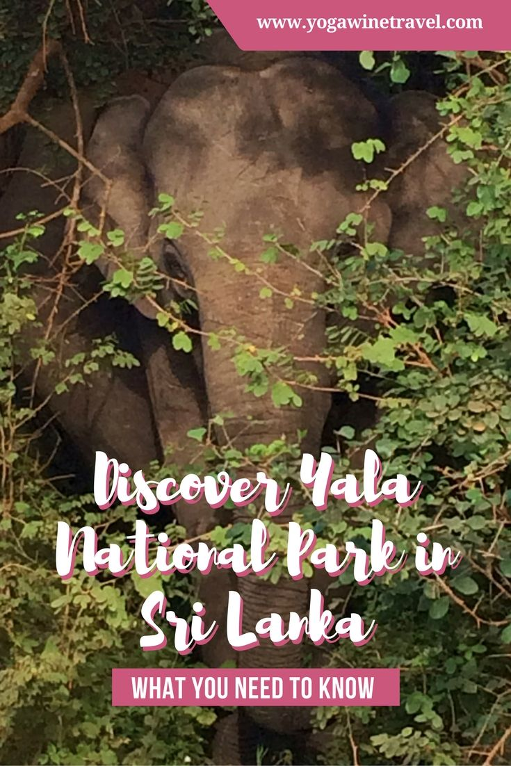 Yogawinetravel.com: Discover Yala National Park in Sri Lanka - What You Need to Know