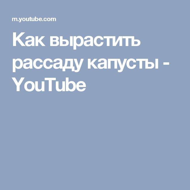 Как вырастить рассаду капусты - YouTube
