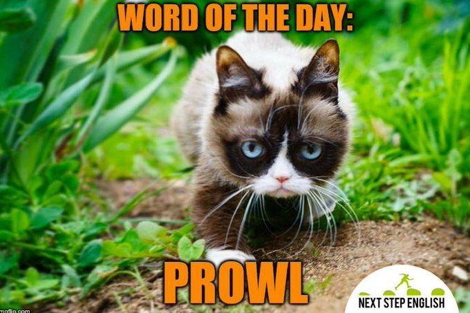 Next Step English On Twitter Grumpy Cat Grump Cat Grumpy Cat Meme