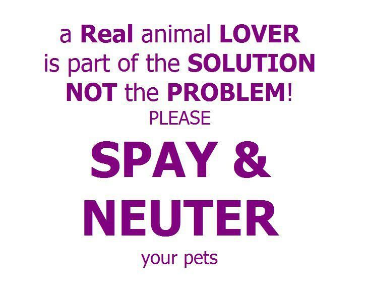 persuasive speech spay and neuter pets I'm highly in favor of spaying or neutering pets my two cats were spayed and  neutered before i adopted them i'm in favor of requiring shelters.