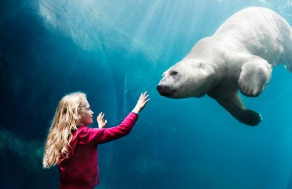 Den arktiske ring i Zoo i København
