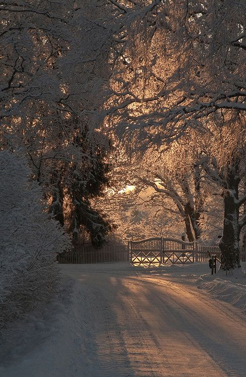 Winter Sunset creates beautiful light and shadows on the snow covered trees and road.