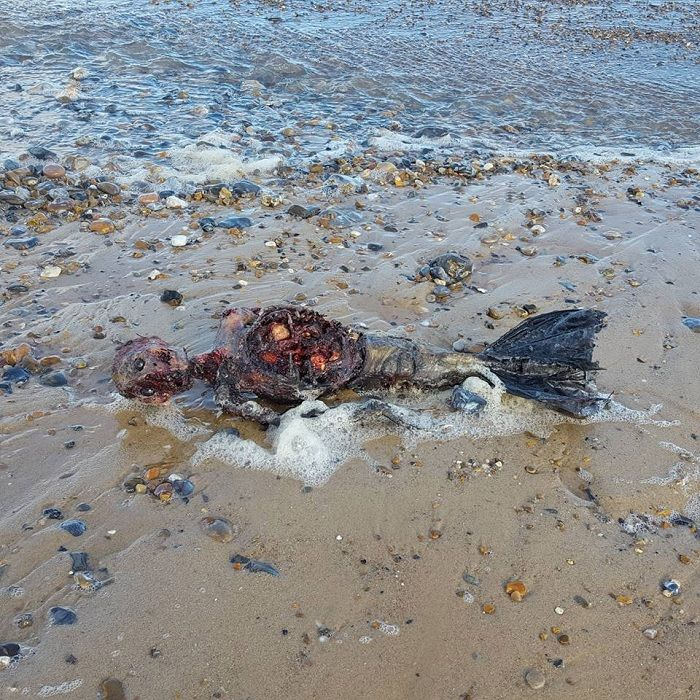 Shocking! Dead #Mermaid Found On The Beach Of England - Video Here
