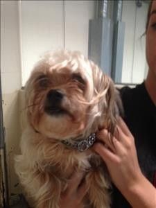 Check out Cutie's profile on AllPaws.com and help her get adopted! Cutie is an adorable Dog that needs a new home. https://www.allpaws.com/adopt-a-dog/shih-tzu-mix-yorkshire-terrier-yorkie/4728902?social_ref=pinterest