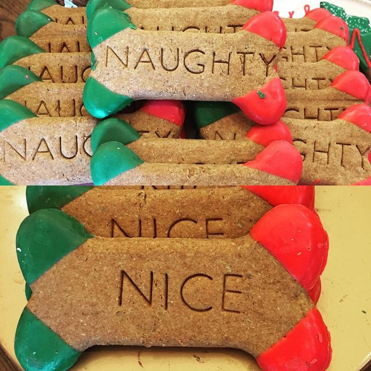 #Naughty or #Nice? Which one is your pup? We have holiday treats for all your pets! Stop by Woof Gang Bakery & Grooming Clearwater's *NEW LARGER* location located one shopping center south of our old location at 2481 N. McMullen Booth Road, Suite F behind Chase Bank & Walgreens. We still have a few grooming appointments available before Christmas too so call us at (727) 202-5312! 🎄🎅🏼