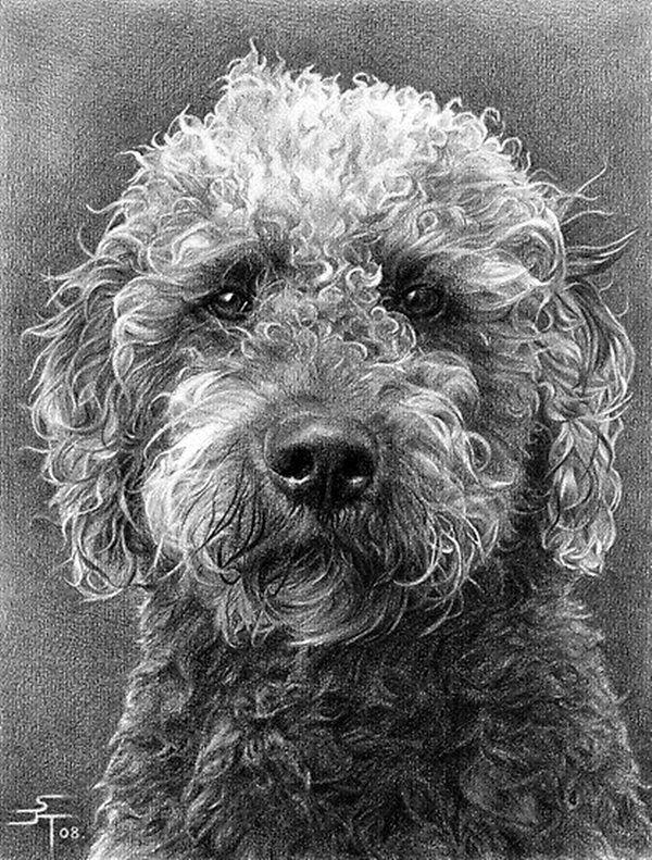 Realistic Animal Pencil Drawings (10)