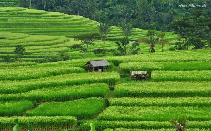 Beautiful Jatiluwih, Bali