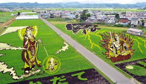 青森県田舎館村の今年の作品「悲母観音と不動明王」。緑、紫、黄、赤、白、オレンジ、濃緑の7色の稲を1200人が手植えした。9月30日まで見られる=同村田舎館  記事「モナリザ・観音様…田んぼアート進化 今年は7色の稲で」より