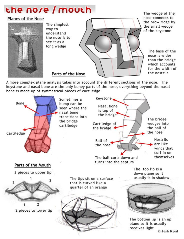 113 best Character Anatomy | Nose images on Pinterest | Art ...