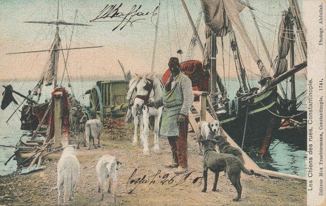 Osmanlıda; dünyadaki ilk hayvan hastanesi 1800 lerde osmanlıda açılmıştır..